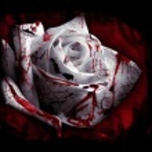 Default bleed rose cropped