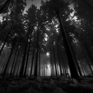 Default 6920593 dark forest wallpaper
