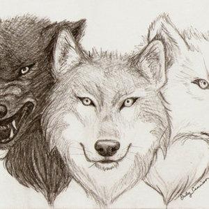 Default wolf
