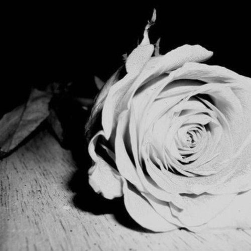 Default rose  s shadow by la34 d33ohn3