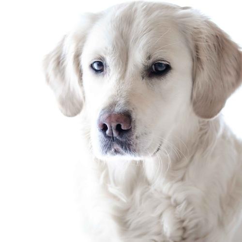 Default wildlife photography pet photography dog animal 159541