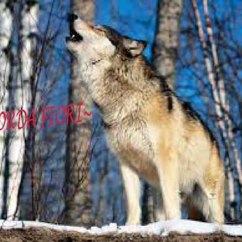 Default wolfgjbjonduh