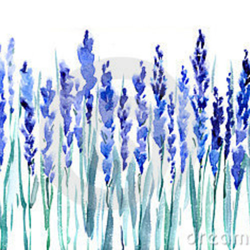 Default lavender flowers 23621712