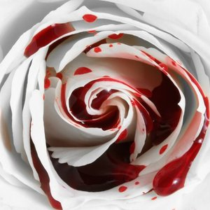 Default the white rose by goddessofownage d6azw4c