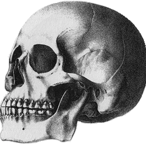 Default puelche skull patagonia mongoloid crania americana 1839 samuel george morton