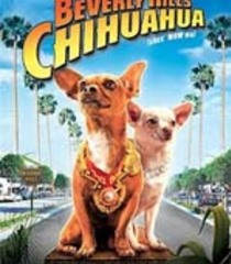Default beverly hills chihuahua
