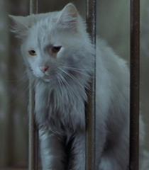 Default white cat
