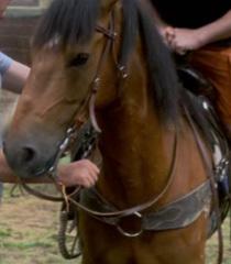 Default lp the horse