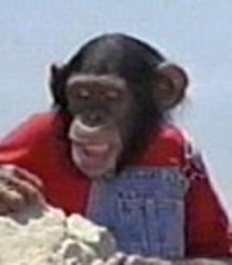 Default bulk chimp