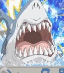 Default shark fujishiro