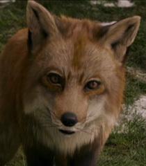 Default the fox 7fc03378 743b 4e0f ba8e 11b4717330a8