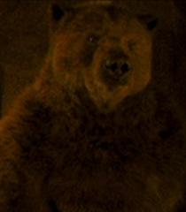 Default bulgy bear
