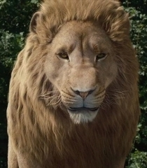 Default aslan 834bc24b 6a3e 4f8e aa09 1c76bebe7f53