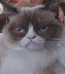 Default grumpy cat