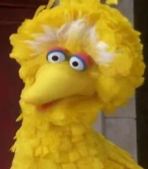 Default big bird 8093a695 b5b1 4fe3 a8b8 4f94aabe7447