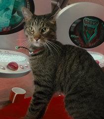Default cat spy analyst 3