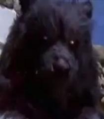 Default terror bear