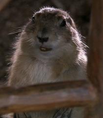 Default groundhog