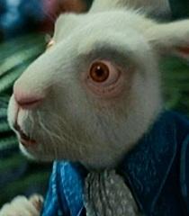 Default white rabbit 2231871b 4cec 4b3f 81e1 ea29317e9c17