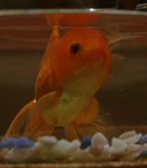 Default fish beb65a33 e018 4a77 82b3 b1fac8a8d1db