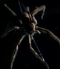 Default spider b5666e0a 0be3 497b bf87 98480bc26c59