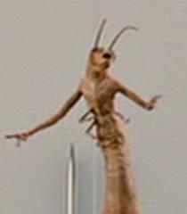Default worm guy 4