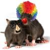 Thumb rat clown icon