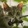 Thumb catkillsbird