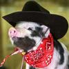 Thumb pig