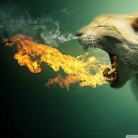 Default flaming cat wallpaper 960x640