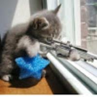 Default sniper cat