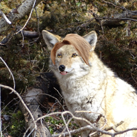Default funny fox