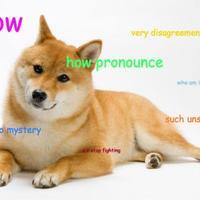 Default pronounce doge4.jpg.crop.promovar mediumlarge
