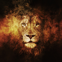 Default abstract lion wallpaper 7